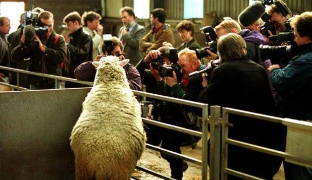 clonarea oitei olly, primul om clonat, clonarea oamenilor, clonarea animalelor