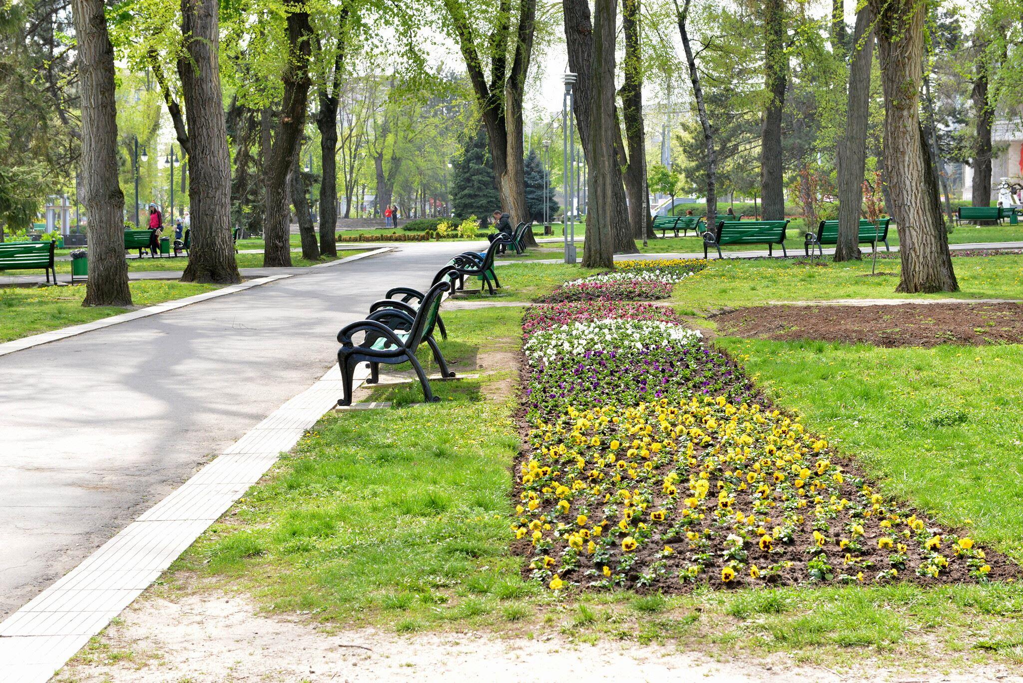 Floricelele din covorul de flori sunt deja plantate în mai multe locuri din Chișinău. silvia radu